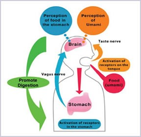 protein-digestion